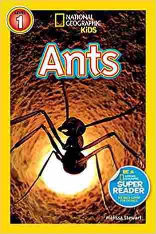 """Ants"""""""