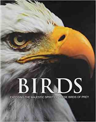 Buy Spirit of Birds of Prey by Hannah Montana online in india - Bookchor   9781445444291