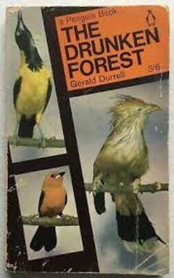 The-Druken-Forest