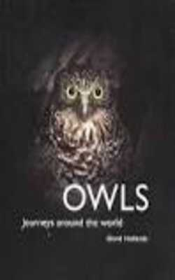 Owls-:-Journeys-Around-the-World